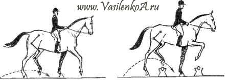 Кавалетти для обучения лошади.